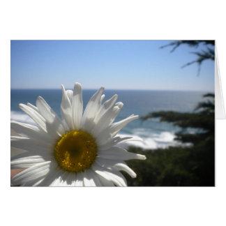 Ocean Beach Daisy Card