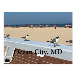 Ocean City Beach, MD with Birds Postcard