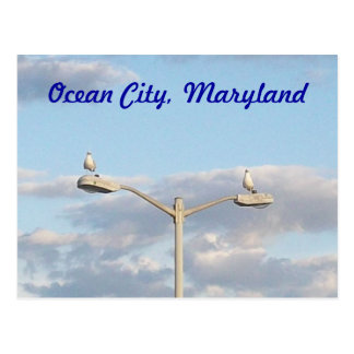 Ocean City Birds Postcard