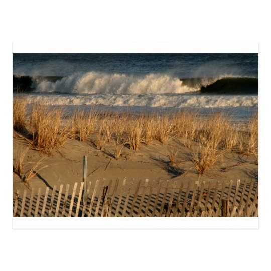Ocean City Dunes with Waves Postcard