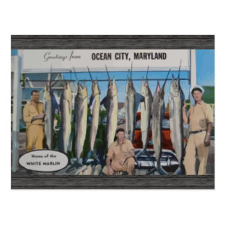 Ocean City, Maryland Home Of The White Marlin, Vin Postcard
