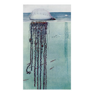 Ocean Life Sea Creatures Poster