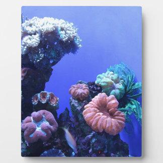 ocean_one plaque