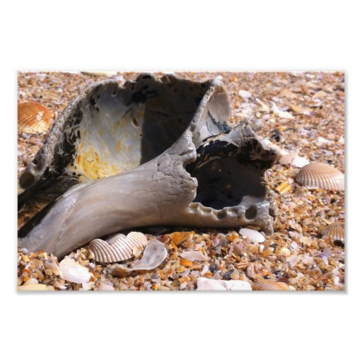 Ocean Sea Shell Photo Art