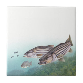 Ocean Striped Bass Fish Sea Fishing Tile