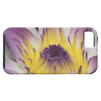 Oceania, Fiji, Purple Panama Pacifica Nymphea iPhone 5 Case