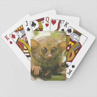 Oceania, Indonesia, Sulawesi. Tarsier tarsius Playing Cards