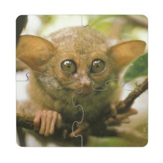 Oceania, Indonesia, Sulawesi. Tarsier tarsius Puzzle Coaster
