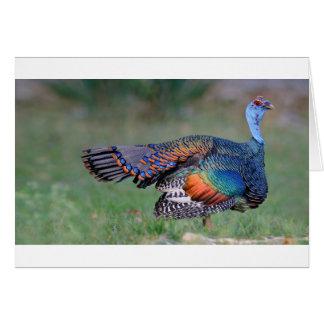 Ocellated Turkey in Guatemala Card