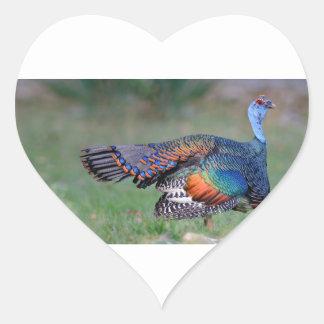 Ocellated Turkey in Guatemala Heart Sticker