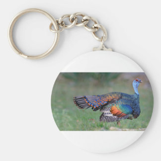 Ocellated Turkey in Guatemala Keychain