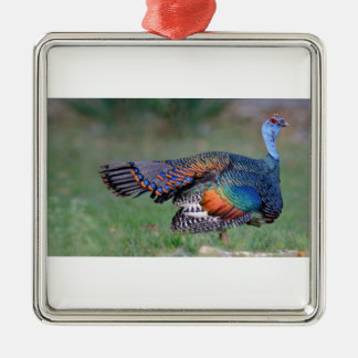 Ocellated Turkey in Guatemala Metal Ornament