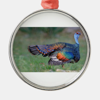 Ocellated Turkey in Guatemala Metal Ornament