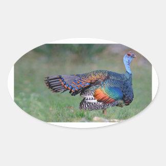 Ocellated Turkey in Guatemala Oval Sticker