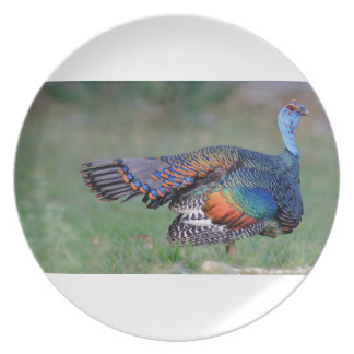 Ocellated Turkey in Guatemala Plate