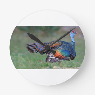 Ocellated Turkey in Guatemala Round Clock