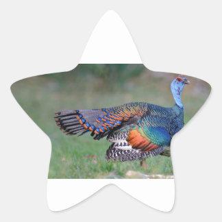 Ocellated Turkey in Guatemala Star Sticker