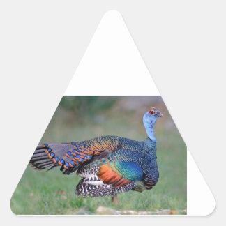 Ocellated Turkey in Guatemala Triangle Sticker