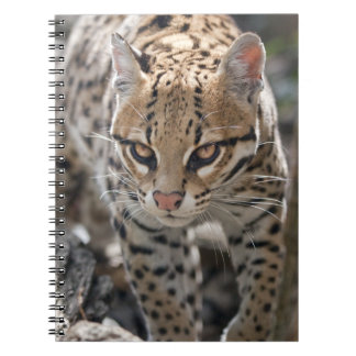 Ocelot Notebook