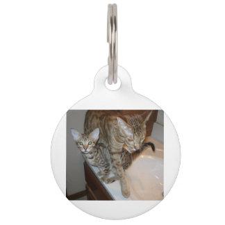 ocicat Tawny_kitten_with_cinnamon_mother Pet ID Tag