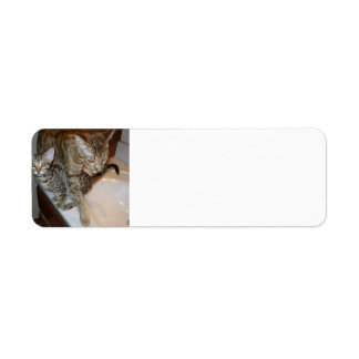 ocicat Tawny_kitten_with_cinnamon_mother Return Address Label