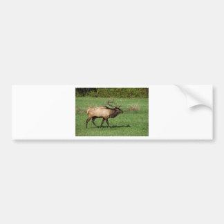 Oconaluftee Elk Bumper Sticker
