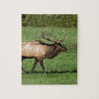 Oconaluftee Elk Jigsaw Puzzle