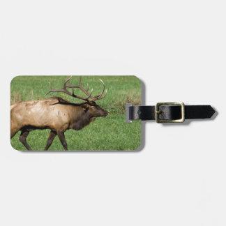 Oconaluftee Elk Luggage Tag