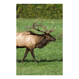 Oconaluftee Elk Stationery