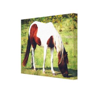 Ocracoke Wild Horse Canvas Print
