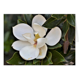 October Magnolia Card - 5 x 7