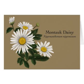October - Montauk Daisy Card