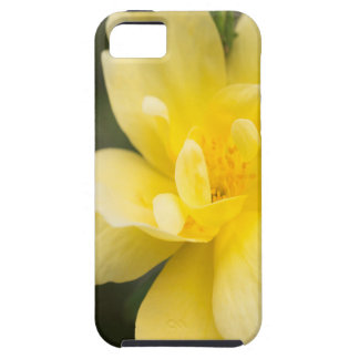 October Rose Case For The iPhone 5