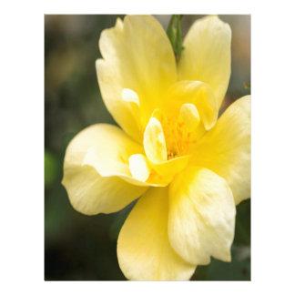 October Rose Letterhead