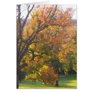 October sugar maple card