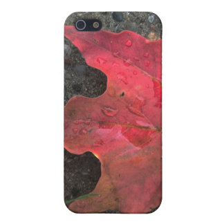 October Sunrise iPhone 5/5S Case