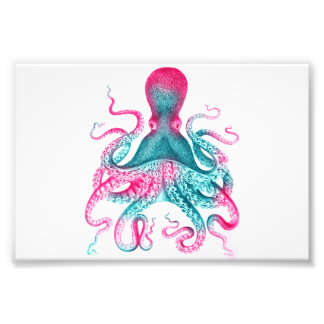 Octopus illustration - vintage - kraken photo print