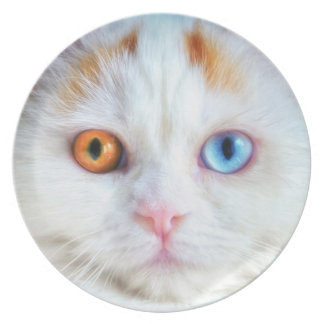 Odd-Eyed White Persian Cat Party Plate