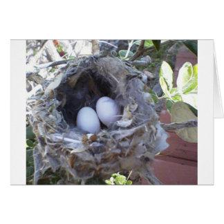 Oeufs de colibri de blanc de carte de note