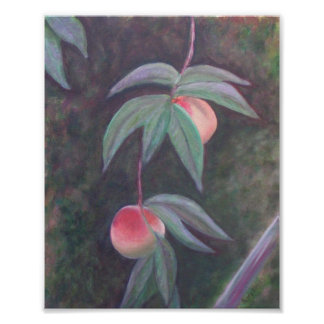 OF FLORIDA PEACHES Poster