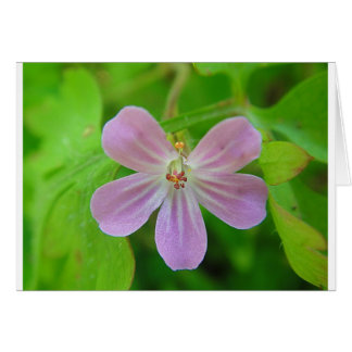 Of pink Weis touched stork bill bloom Card