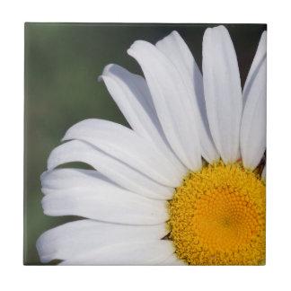 Offset Daisy Ceramic Photo Tile
