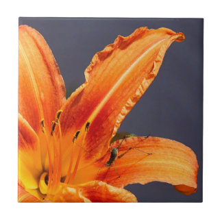 Offset Day Lily with Critter Ceramic Photo Tile