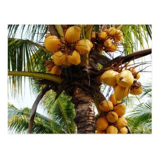 Oh Coconuts Postcard