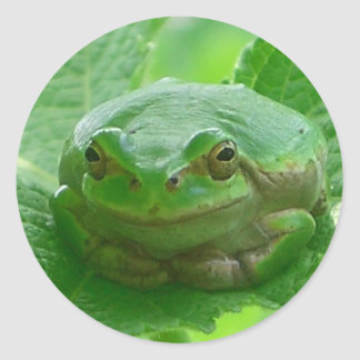 Oh happy day - green frog close up classic round sticker