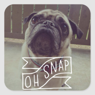 Oh Snap! Sticker