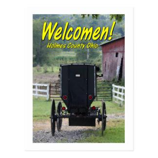 OHCA101.Amish Buggie - Holmes Co OH. Postcard