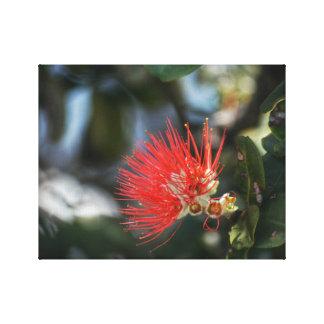 Ohia Lehua Blossom Canvas Print