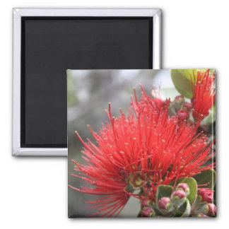Ohia Lehua blossom Square Magnet