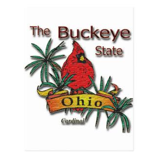 Ohio Buckeye Cardinal Postcard